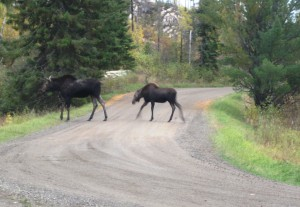 MooseCrossing