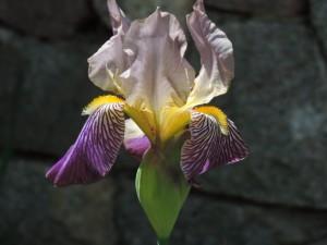 Flowers of Chik-Wauk 003